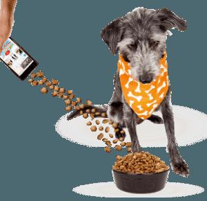 Rena Uchiha: Pobijmy razem rekord Guinnessa, pomagając psom ze schronisk!  #REKORDOWAMISKA