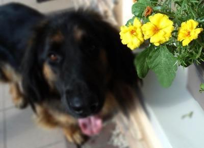 R I L S E E E : Kwieciste kwiaty a w nich psy