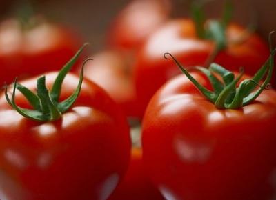 Ciekawostki o pomidorach