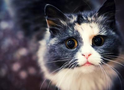 8 naukowych ciekawostek na temat kotów