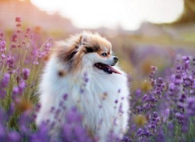 Rośliny niebezpieczne dla psów