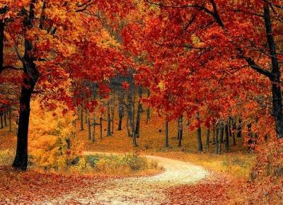 Rozsądne Odchudzanie: Co suplementować jesienią ?