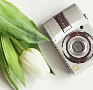 Fotografia by M: Białe tulipany