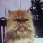 rudigingercat