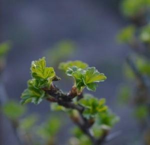 KRYSIASTYLE: Zielone pąki