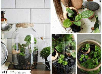 It's so easy DIY blog: DIY - jak zrobić las w słoiku
