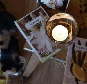 Klaudencja: Świeczki BISPOL