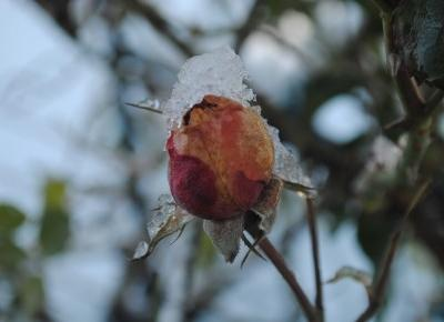 Makro winter
