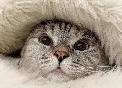 Najsłodsze i najpopularniejsze kociaki instagrama! Nie będziecie mogli oderwać od nich oczu!