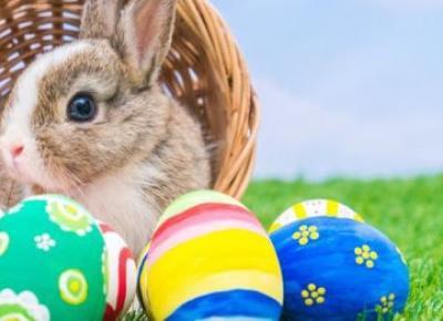 Shikatemeku.pl: Wielkanoc ❤️