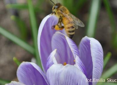 Skucińska art: Pszczółki już latają.