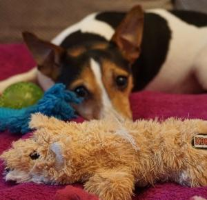 Dlaczego warto chować psie zabawki? |