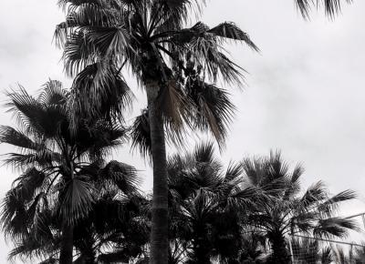 "Studentka Lek-dent on Instagram: ""Take me back 😩🌴🌊 . . . #palmtrees #palmy #turcja #wakacje #holidays #tropiki #sky #lifestyleblogger #tb #sesja #preset #lightroom…"""