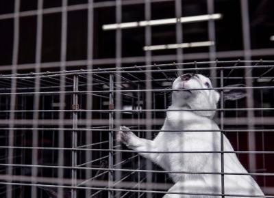 Kosmetyki testowane na zwierzętach. Sprawdź czy je kupujesz? - Styl Doroty
