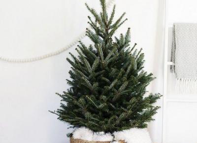 Kilka pomysłów na ozdobienie świątecznego drzewka.