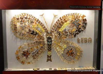 Podróże Dwóch Włóczykijów  ~  Two Gadabouts' Journeys: Muzeum Motyli w Łebie - polecamy! [We recommend the Butterfly Museum in Łeba, Poland]