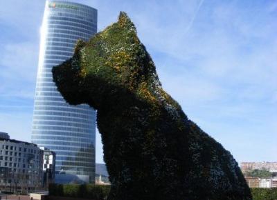 Puppy z Bilbao – Udomowiony