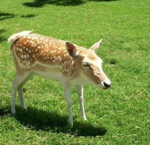 Jak wyglądałyby zwierzęta, gdyby ewolucja poskąpiła im szyi