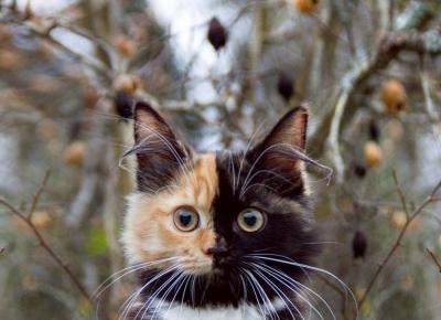 Odpowiednio dbasz o swojego kota latem? Sprawdź!