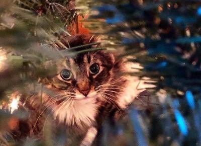 Najbardziej popularne jedzenie szkodliwe dla kota
