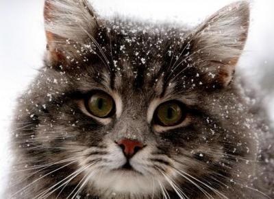 Sprawdź czy twój kot chce cię ZABIĆ!