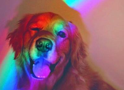 Sprawdź jak rozpoznać udar cieplny u psa!