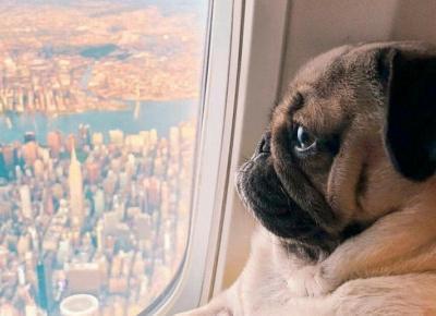 Te rasy psów są najbardziej zmodyfikowane przez człowieka!