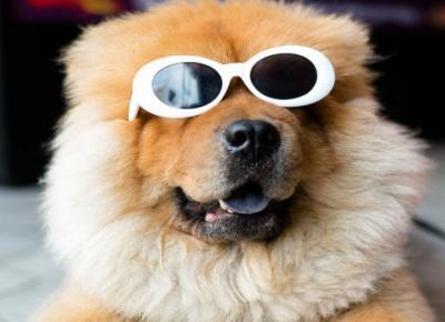 Najśmieszniejsze profile psów na Instagramie