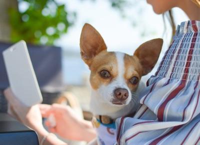 Pies moim najlepszym przyjacielem – Monika Gaca | Wyjątkowa szara myszka