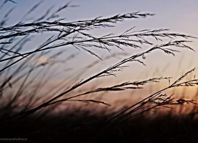Iwona_Photography: Jak dobrze wsta? rano