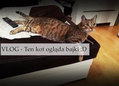 VLOG Ten kot ogląda bajki w telewizorze