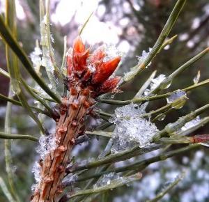 Wiktoria Blog: Śnieżne zdjęcia!