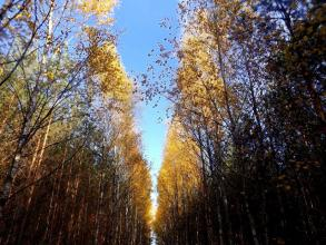 Wiktoria Blog: Jesienny las! | photo
