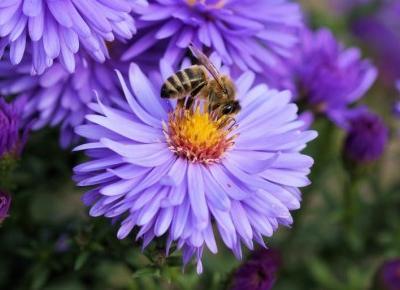 Co by było gdyby pszczoły wyginęły?