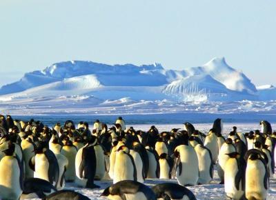 22 ciekawostki o Pingwinach