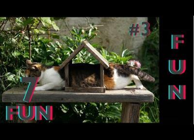 Śmieszne koty i psy zabawne zwierzęta Padniesz ze śmiechu 7Fun #3