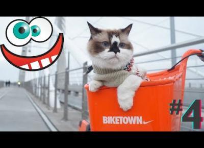 Śmieszne koty i psy zabawne zwierzęta Padniesz ze śmiechu funny #4