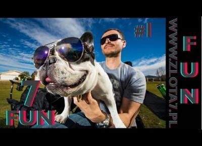 Śmieszne koty i psy zabawne zwierzęta Padniesz ze śmiechu 7Fun #1