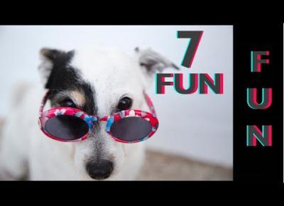 Śmieszne koty i psy zabawne zwierzęta Padniesz ze śmiechu 7Fun #7