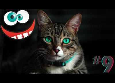 Śmieszne koty i psy zabawne zwierzęta Padniesz ze śmiechu funny #9
