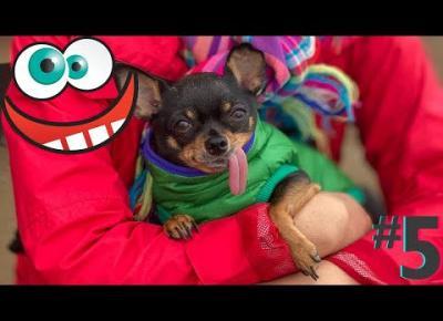 Śmieszne koty i psy zabawne zwierzęta Padniesz ze śmiechu funny #5