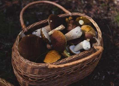 Grzybobranie – co warto wiedzieć zanim pójdziesz na grzyby - Zlota7