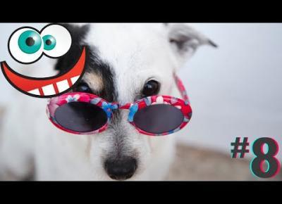 Śmieszne koty i psy zabawne zwierzęta Padniesz ze śmiechu funny #8