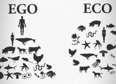 Ekologiczne triki, które możesz wykonać w domu