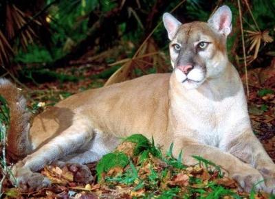 Gatunki zwierząt, których już nie zobaczymy – do ich wyginięcia przyczynił się człowiek