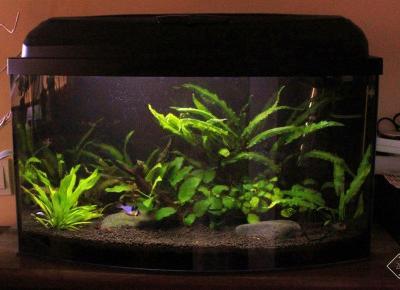 Co warto wiedzieć przed założeniem akwarium w domu? | Zuzka Pisze