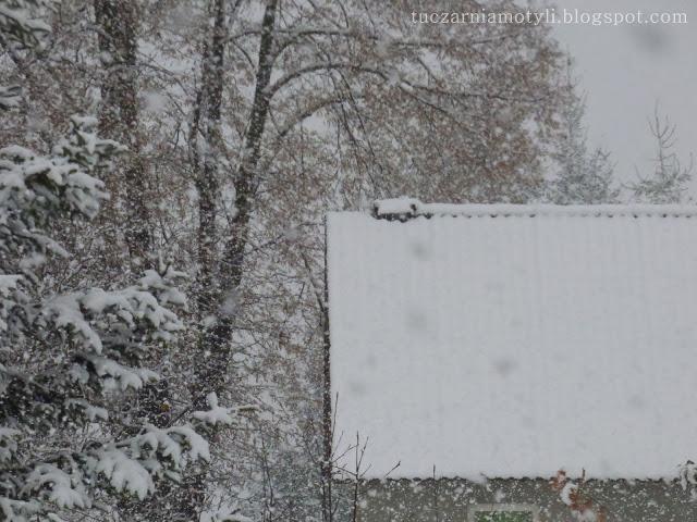 Tuczarnia Motyli: Śnieg