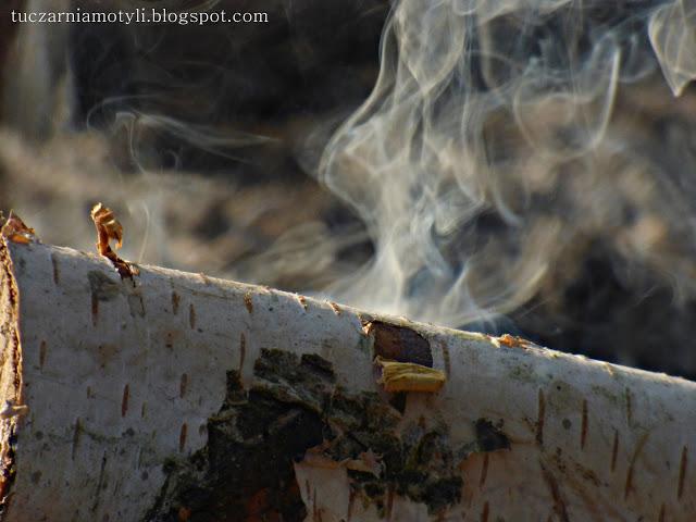 Tuczarnia Motyli: Płomień