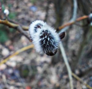 Tuczarnia Motyli: Odkryj piękno