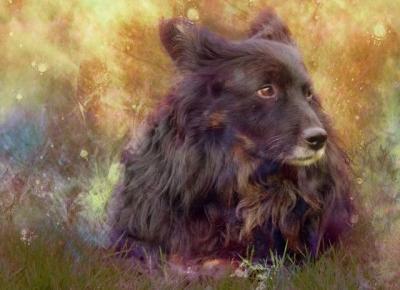 zuzmot: Pies